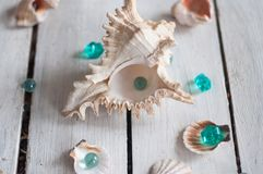 Shells, pearls, sea, background, white background, wooden background, sea shells Stock Photos