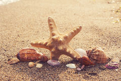Beautiful sea shells and starfish on an south ocean coast with s Stock Image