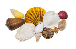 Beautiful sea shells on a white background Royalty Free Stock Photos