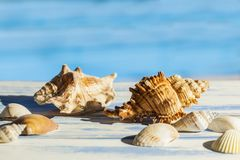 Sea shells on a worn out table stock image