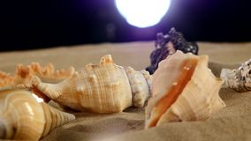 Beautiful sea shellsand starfish on beach sand stock video footage