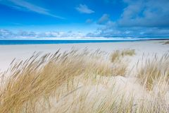 Beautiful sea shore with wild grass and shore plants Stock Photo