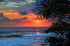Beautiful sea sunset and palm leaves Royalty Free Stock Image
