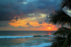 Beautiful sea sunset and palm leaves Stock Image