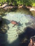 Beautiful sea turtle royalty free stock photography