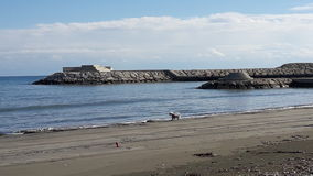 Beautiful sea view small dog playing rocks port blew sky. Dogs love to play next to the sea Stock Photos
