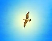 Beautiful seagull sea Stock Photos