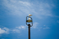 Beautiful seagull sitting on a top of street lamp Stock Photo