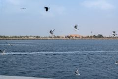 Beautiful Seagulls flying over the beach royalty free stock photo