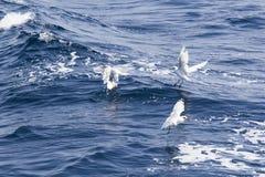 Beautiful seagulls over the sea Stock Photos