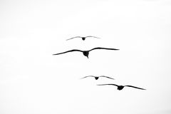 Beautiful seagulls soaring in the sky Stock Image