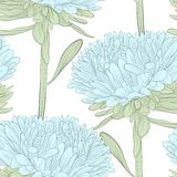 Beautiful seamless background with blue flowers aster on a white background. Hand-drawn contour lines and strokes. Perfect for background greeting cards and Stock Photography