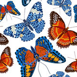 Beautiful seamless background of butterflies, vector illustratio Royalty Free Stock Photography