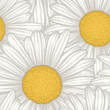 Beautiful seamless background with flowers daisy. Royalty Free Stock Images