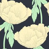 Beautiful seamless background with flowers Plant Paeonia arborea (Tree peony) with stem and leaves. Stock Images
