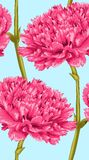 Beautiful seamless background with pink carnation. Stock Photography