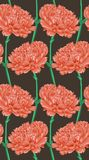 Beautiful seamless background with pink carnation. Stock Images