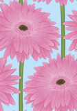 Beautiful seamless background with pink gerbera flower with a stem. Stock Photography