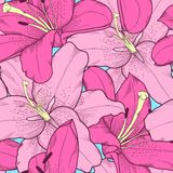 Beautiful seamless background with pink lilies hand-drawing. Stock Photo