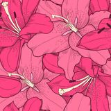 Beautiful seamless background with pink lilies hand-drawing. Royalty Free Stock Photography