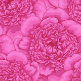 Beautiful seamless background. pink peonies . Royalty Free Stock Images