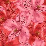 Beautiful seamless background with pink and red alstroemeria flower. Stock Photo