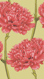 Beautiful seamless background with red carnation. Stock Photography