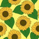 Beautiful seamless background with sunflowers. Stock Photography
