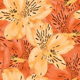 Beautiful seamless background with yellow and orange alstroemeria flower. Royalty Free Stock Images
