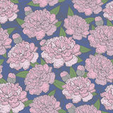Beautiful Seamless blooming peony pattern on blue background,  illustration.  Royalty Free Stock Photos
