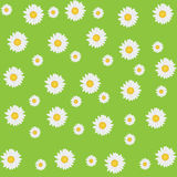 Beautiful seamless daisy background Royalty Free Stock Photo