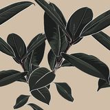Beautiful seamless floral pattern background with dark tropical ficus elastica. Perfect for wallpapers, web page backgrounds, surface textures, textile stock illustration