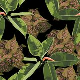 Beautiful seamless floral pattern background with tropical bright ficus elastic and exotic plants. Perfect for wallpapers, web page backgrounds, surface vector illustration