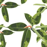 Beautiful seamless floral pattern background with tropical bright ficus elastica. Perfect for wallpapers, web page backgrounds, surface textures, textile Stock Illustration