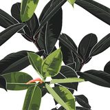 Beautiful seamless floral pattern background with tropical dark and bright ficus elastica. Perfect for wallpapers, web page backgrounds, surface textures vector illustration