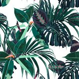 Beautiful seamless floral pattern background with tropical dark jungle plants. Perfect for wallpapers, web page backgrounds, surface textures, textile. White Royalty Free Illustration