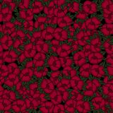 Beautiful seamless floral pattern . Flower vector illustration. Field of flowers.  Stock Photos