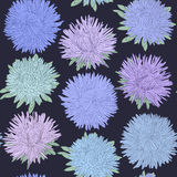 Beautiful seamless pattern with aster flowers. design for greeting card Stock Photo