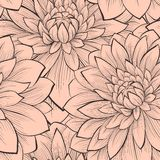 Beautiful seamless pattern with blooming dahlias closeup. Royalty Free Stock Image
