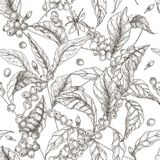 Beautiful seamless pattern with coffea or coffee tree branches, leaves, blooming flowers and fruits on white background vector illustration