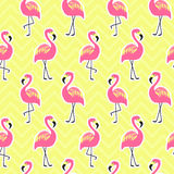 Beautiful seamless pattern with flamingo Royalty Free Stock Photo
