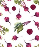 Watercolor beet vector pattern. Beautiful seamless pattern with hand drawn watercolor beet Royalty Free Stock Image