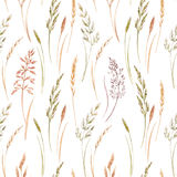 Wild field grass pattern. Beautiful seamless pattern with hand drawn watercolor wild field grass Royalty Free Stock Photography