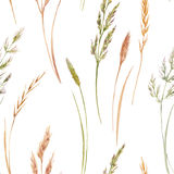 Wild field grass pattern. Beautiful seamless pattern with hand drawn watercolor wild field grass Royalty Free Stock Photo