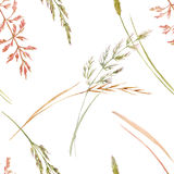 Wild field grass pattern. Beautiful seamless pattern with hand drawn watercolor wild field grass Stock Images