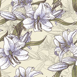 Beautiful seamless pattern with lilies Stock Photography