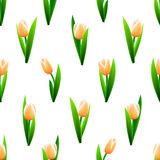 Beautiful seamless pattern with pink tulip flowers Royalty Free Stock Image