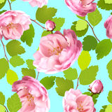 Beautiful seamless pattern with realistic roses on a blue background.. Beautiful seamless pattern with realistic pink roses on a blue background. Seamless Royalty Free Stock Photo