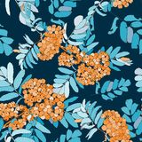 Beautiful seamless pattern  with rowan berries Stock Photos