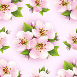 Beautiful seamless pattern with sakura blossom Stock Photos